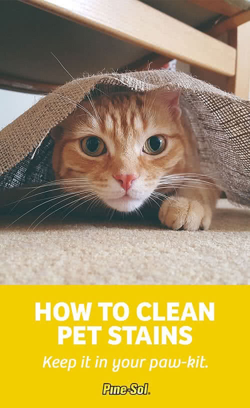 How To Remove Pet Stains Pine Sol 174