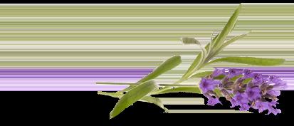 Lavender Clean<sup>®</sup>