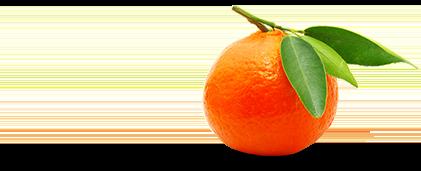 Mango Mandarin Burst